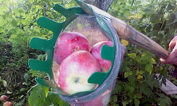Своими руками для сбора яблок 502